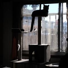 お正月/すき焼き/キャットタワー/ニャンコ同好会/暮らし クリスマス前から会ってないパートナーさん…(2枚目)