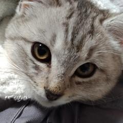 保護猫/野良猫/サクラカット/サクラちゃん/命名/威嚇/... いかく保護子猫ちゃん😼  昨日首輪をお下…