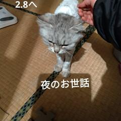 サクラカット/さくら耳猫/ご縁/可愛い/猫との暮らし/ニャンコ同好会/... 先程 マダニちゃん(テラ)のお迎えに こ…(3枚目)