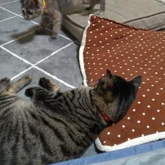 保護猫/野良猫/先住猫/猫の居る暮らし もう慣れてきたかな~  テンも 安心だよ…(1枚目)