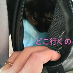 保護猫活動/バイバイ/幸せに/ありがとう/サビ猫/ニャンコ同好会/... 2021年1月10日 正午12半~1時 …(4枚目)