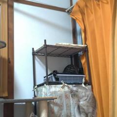 野良猫/保護猫/猫のいる暮らし/ニャンコ同好会 チビチビちゃんは まだまだ怖いもの知らず…