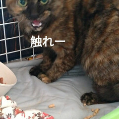 猫との暮らし/野良/おつかれ/手術から帰って/リミア/不具合 10枚目が フォト上げたのに無い😼  新…