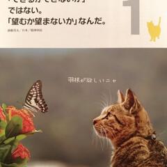 言葉/カレンダー/猫/おでかけ/フード/100均/... ダイソーさんの日めくりカレンダー😸 10…