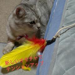 サビ猫/サバトラ/キジトラ/猫との暮らし/ニャンコ同好会 昨夜の テン チロ サクラ😍(6枚目)
