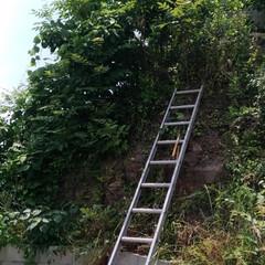 作業/ぎっくり腰/草刈り/暮らし/住まい/掃除/... 午前中から 建物の周りに 虫除けの薬を中…