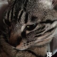 買い物/筋トレ/肩こる/重い/抱っこちゃん/寝起き猫/... 最近テンとマルは 朝には布団の上に、よく…