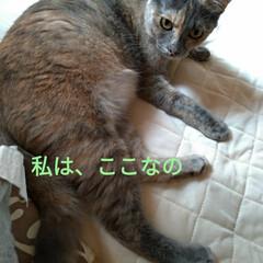 ニャンコ同好会/朝から/猫との暮らし/昼寝/サクラ耳/ふてくされ/... 朝から 作業とか動いたから ニャンズも …(7枚目)