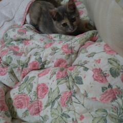 キャットタワー/ニャンコ同好会/遊び時間/治療中/保護猫/野良猫/... チビチビちゃん 遊び時間😸🌆  まるで …