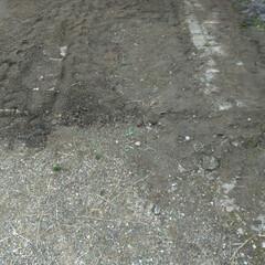 坐骨神経痛/ドクダミとの戦い/水はけが悪い/草取り/腰痛し/寒い/... あ~掘った掘った💦 深さ10センチくらい…