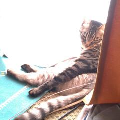 ツートンカラー/日向ぼっこ/猫のいる暮らし/にゃんこ同好会/奇跡の一枚/偶然 日向ぼっこしていた奇跡の一枚(*⌒▽⌒*…(1枚目)