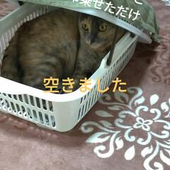 猫ベッド/消えた猫/くたびれもうけ/ニャンコ同好会/猫との暮らし/カゴ/... 今日は、換気扇2つ洗い 換気扇周り拭いた…(3枚目)