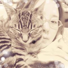 あけおめ/ペット/猫/にゃんこ同好会/年末年始 テンちゃん顔に寄りかかりすぎ😅けっこう重…