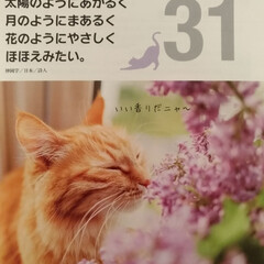 リミア/カレンダー/LIMIAペット同好会/猫/100均/ダイソー/... 今日で、3月も終わり 明日で、平成最後の…