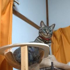 晩ご飯/バジル/ビックリ/穴無し洗濯槽/キャットタワー/猫との暮らし/... 昼から 気圧などで中々のアチコチのだるさ…(2枚目)