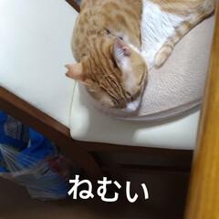多頭飼い/ニャンコ同好会/あくび/眠い/ごはん待ち/茶トラシロ/... ごはん待ち テンちゃんと  ねむい マル😸(6枚目)