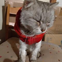 さくらねこ/二度の避妊手術/避妊手術/猫との暮らし/ニャンコ同好会/野良猫 マダニちゃんの お世話完了🐱  行くと …(2枚目)