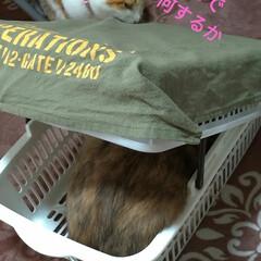 猫ベッド/消えた猫/くたびれもうけ/ニャンコ同好会/猫との暮らし/カゴ/... 今日は、換気扇2つ洗い 換気扇周り拭いた…(5枚目)