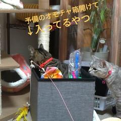お願い/悲しい/地元サイト/子猫/野良猫/いたずら/... 昨日、放置サボちゃんの花が咲いてました✨…(3枚目)