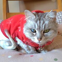 可愛い/猫との暮らし/ニャンコ同好会/保護猫/野良猫/疲れた/... 今日は、オカンちゃんが休みで マッサージ…(3枚目)