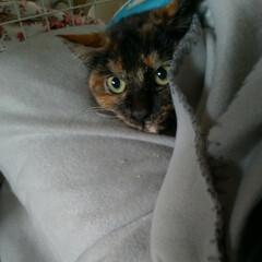 人慣れ練習中/野良猫お世話/猫との暮らし/ニャンコ同好会/明けましておめでとう/野良猫/... 🎍明けましておめでとうございます🎍 リミ…