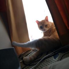 茶トラ白ハチワレ/写真/思い出/猫のいる暮らし/ニャンコ同好会/里親さん/... ここ最近の マルの写真😸  他県に行った…(5枚目)