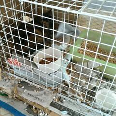 野良猫メモ/コロニーを離れて/捕獲器/野良猫 捕獲猫 1日目 チビチビの箱のお家を譲っ…