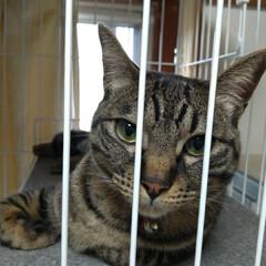 猫/可愛い/猫との暮らし/ニャンコ同好会/猫ケージ 掃除機したら テンが居ない と見渡したら…(2枚目)