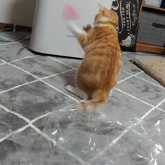 花粉症/家電/買い物/プラズマクラスター/空気清浄機/猫じゃらし/... 猫運動会と、稲なのか寝起きに酷い花粉症😱…(2枚目)