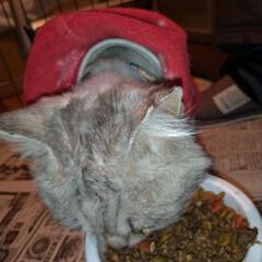 さくら猫の日/避妊手術/涙/さくらねこ/二度目手術/野良猫/... 3月22日は さくらねこの日でした🐱  …(2枚目)