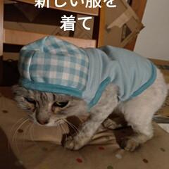 サクラカット/さくら耳猫/ご縁/可愛い/猫との暮らし/ニャンコ同好会/... 先程 マダニちゃん(テラ)のお迎えに こ…(4枚目)