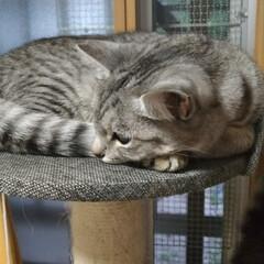 オッサン化/疲れた/ボランティア/便利屋/ダンボール/猫/... 最近少しは 皆で居る時間が戻ったかな~の…