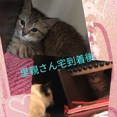 避妊手術/命/にゃんこ同好会/猫/ありがたい/里親さん/... 2020 5 22 先月話を聞いて 捕獲…(3枚目)