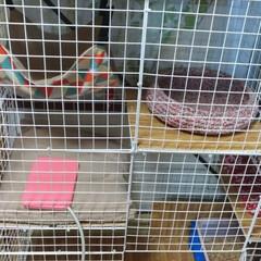 多頭飼い/キジトラ/猫ケージ/ワイヤーネット/ニャンコ同好会/ダイソー/... 最近は、猫衆2匹入れて寝るので 猫ケージ…