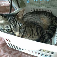 猫ベッド/消えた猫/くたびれもうけ/ニャンコ同好会/猫との暮らし/カゴ/... 今日は、換気扇2つ洗い 換気扇周り拭いた…(2枚目)