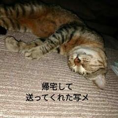 捨て猫/幸せに/不幸な子/譲渡/トマト/ピーマン/... 今日は 凄まじく首と頭が痛い💦 ロキソニ…(3枚目)