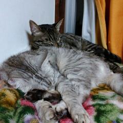 猫の日/TNR/トートバック/猫との暮らし/にゃんこ同好会/野良猫/... 昨日、どうぶつ基金さんから ねこの日に応…(3枚目)