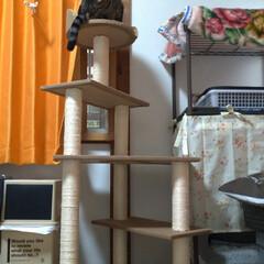 おひとりさま/おいしい/ナン/インドカレー/ランチ/中古/... メルカリで譲り受けたキャットタワー を設…(2枚目)