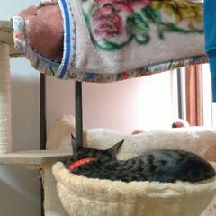 保護猫/遊び/壊れそう/ニャンコ同好会/猫との暮らし ①テン! あんた、いい加減にしなさい😤 …(2枚目)
