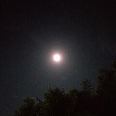 満月/お月さま/一人暮らし 満月だと書いてあったので タンクトップに…(2枚目)