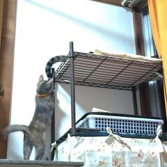 ありがとう/ニャンコ同好会/猫のいる暮らし/片付け/テレビ/付添い/... チビチビちゃん テンのシッポで 遊んで貰…(2枚目)