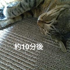 捨て猫/幸せに/不幸な子/譲渡/トマト/ピーマン/... 今日は 凄まじく首と頭が痛い💦 ロキソニ…(2枚目)