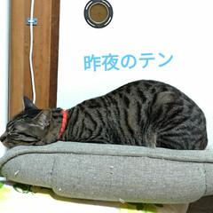 サビ猫/サバトラ/キジトラ/猫との暮らし/ニャンコ同好会 昨夜の テン チロ サクラ😍(1枚目)