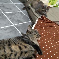 保護猫/野良猫/先住猫/猫の居る暮らし もう慣れてきたかな~  テンも 安心だよ…(4枚目)