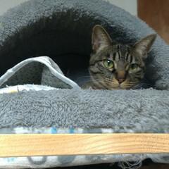 寝んね/猫のいる暮らし/クッション/猫ベッド/ニャンコ同好会 寒いねー 今日昼にテンは珍しく 気に入ら…