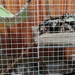 保護猫/威嚇猫/子猫/階段/100均/ダイソー/... テンから始まり 使ってきた100均のワイ…
