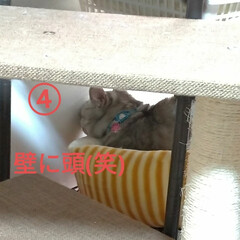 リメイク/メルカリ/手縫い/可愛い/お昼寝/4ニャンズ/... 午後は 猫衆みんなお昼寝でした🐱💤  安…(2枚目)