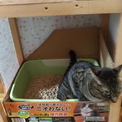 猫トイレ台/猫トイレカバー/廃材/リサイクル/にゃんこ同好会/100均/... 先日、外作業で おばさんに捕まって 立ち…(2枚目)
