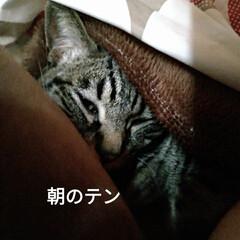 サビ猫/サバトラ/キジトラ/猫との暮らし/ニャンコ同好会 昨夜の テン チロ サクラ😍(7枚目)