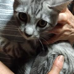 ありがとう/保護猫/キジトラ白/お土産/お迎え/里親さん/... 先日 母が保護していたキジトラ白ちゃん …